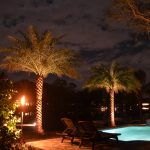 Palm trees and in-ground pool lighting