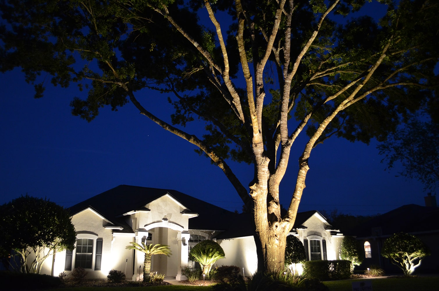 Exterior home lighting on house front and tree