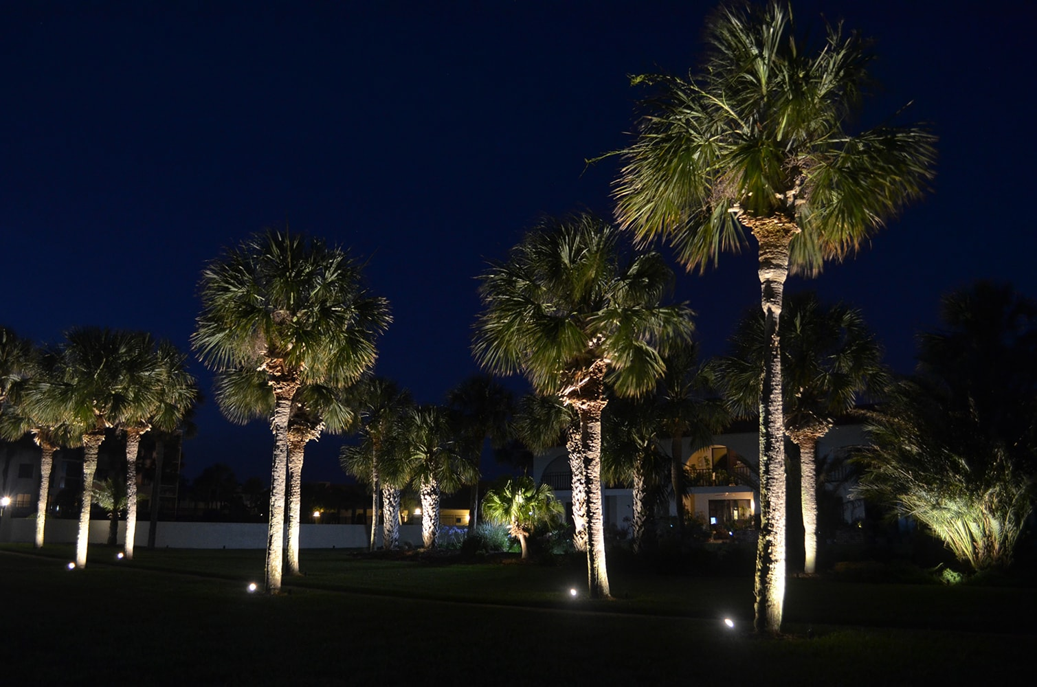 Exterior lights on trees in the front yard