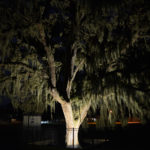 Large tree illuminated with exterior lights