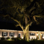 View of front yard tree with exterior lights